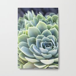Succulent II Metal Print
