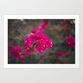 Bougie with the Bougainvillea Art Print