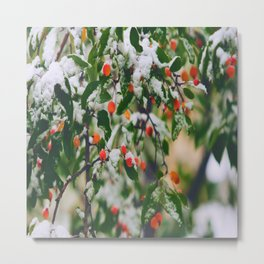 So many wild berries in the snow Metal Print