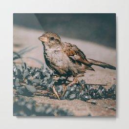Summer Sparrow. Bird Photograph Metal Print