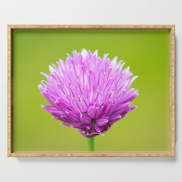 Single pink Chive flower Serving Tray