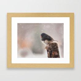 Winter Birds - Junco Framed Art Print