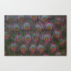 Painted Peacock 2 Canvas Print