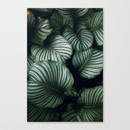 tropical xv Canvas Print