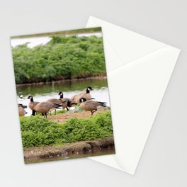 Pecking Order Stationery Cards