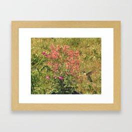 Hummingbird flower 28 Framed Art Print