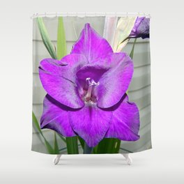 Purple Gladiola Shower Curtain