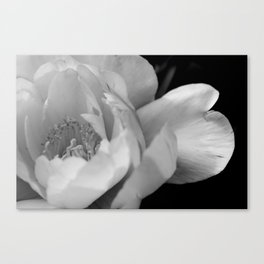 Delicate Peony Flower in B&W Canvas Print