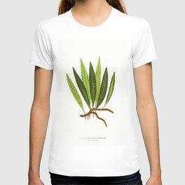 Edward Joseph Lowe - Polypodium Lycopodioides T-shirt