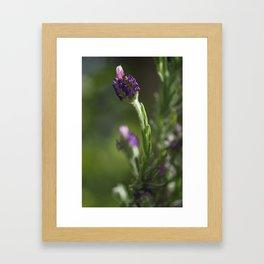 lavendula - I Framed Art Print