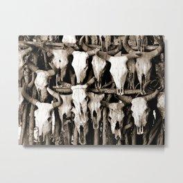 Mexican Cow Skulls Metal Print