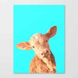 Baby Cow Turquoise Background Canvas Print