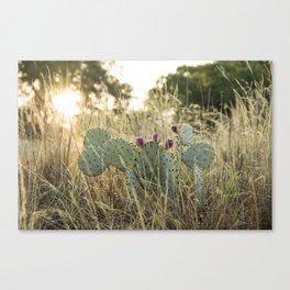 Cactus in Texas Hillcountry Canvas Print