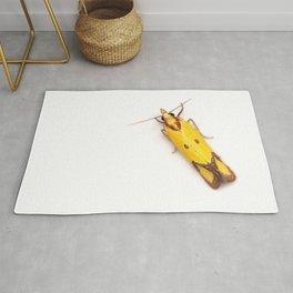 Sulphur Knapweed Moth (Agapeta zoegana) Rug