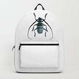 Anoplophora Graafi Beetle Backpack