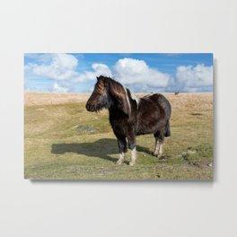 Dartmoor Pony Metal Print