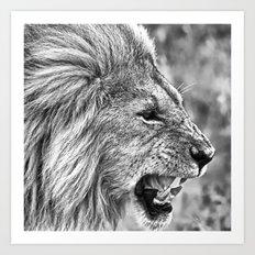 Lion head black and white Art Print