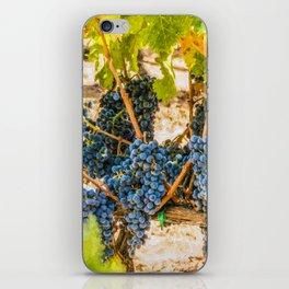 Ripe Grapes on Vine iPhone Skin
