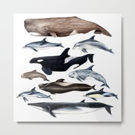 Atlantic whales, dolphins and orca Metal Print