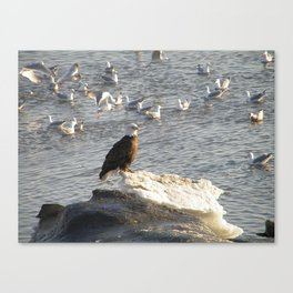 Eagle on Ice Canvas Print
