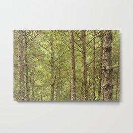 Natural pattern Metal Print