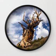 Ancient Bristlecone Pine Wall Clock