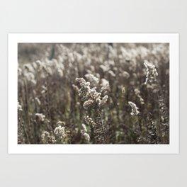 Midsummer Day Art Print