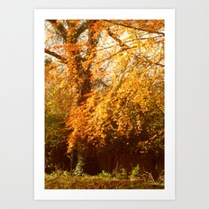 A Colourful Day. Art Print