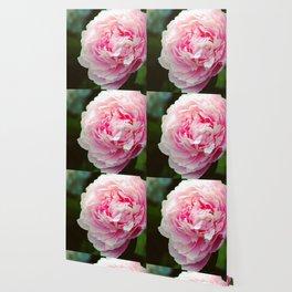 Blush Peony Neon Pink by CheyAnne Sexton Wallpaper