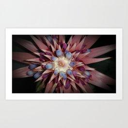 Bromeliad Flower Vignette Art Print