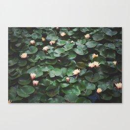Echo Park Waterlillies Canvas Print