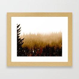 Warm Pines Framed Art Print