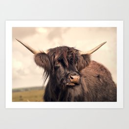Long horn on the moors Art Print