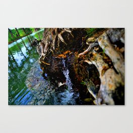Guadalupe Spring Canvas Print