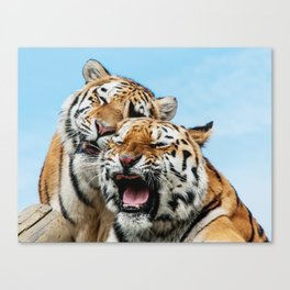 TIGERS - DOUBLE TROUBLE Canvas Print