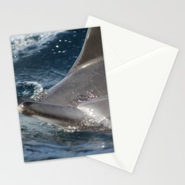 Common Dolphins Stationery Cards