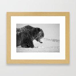 Alaskan Grizzly Bear in Snow, B & W - I Framed Art Print
