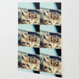 CAT, KATZE Wallpaper