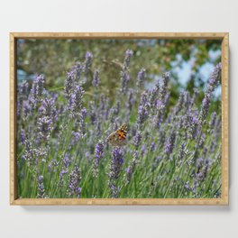 Lavender and Orange Butterfly Serving Tray