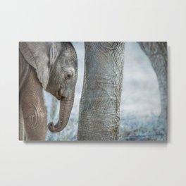 Sleepy baby Elephant Metal Print