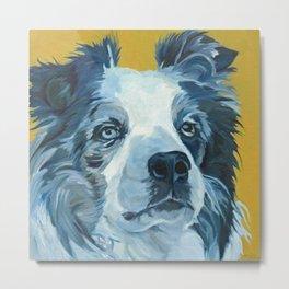 Belle the Border Collie Dog Portrait Metal Print