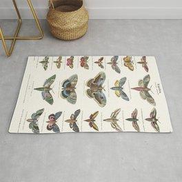 Vintage Moth Chart Rug