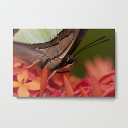 Macro photograph of a butterfly resting on an Ixora flower Metal Print