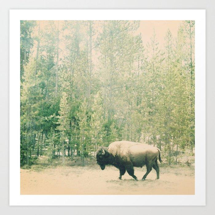 bison I Art Print