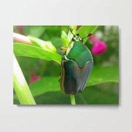 japanese beetle Metal Print