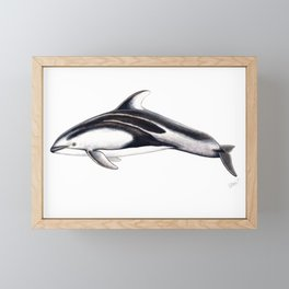Pacific white-sided dolphin Framed Mini Art Print