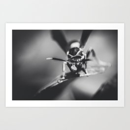 wasp Art Print