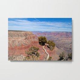 Grand Canyon Twisted Pine Metal Print
