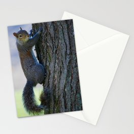 Squirrel climbing Stationery Cards