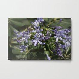 Longwood Gardens - Spring Series 253 Metal Print